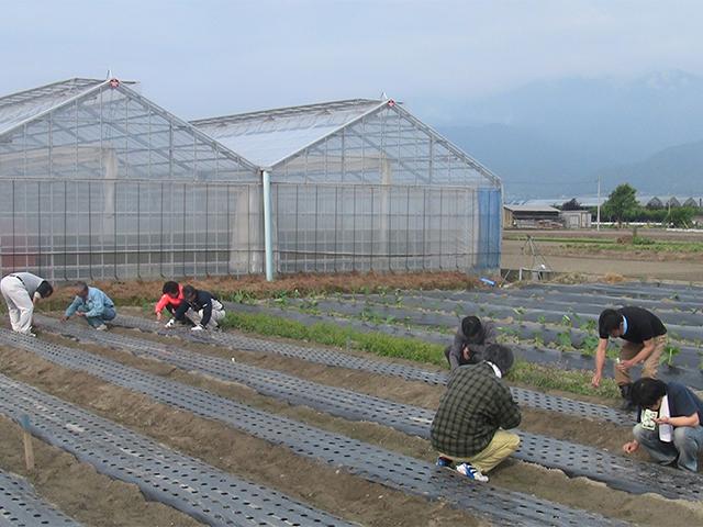 農業研修・定年帰農者の育成